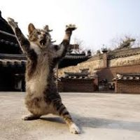 Cat Bathing as a Martial Art
