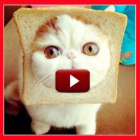 Top 33 Cat Videos