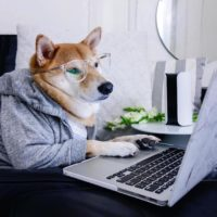Top Twenty Reasons Dogs Don't Use Computers