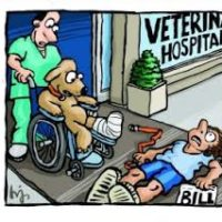 How Vet Bills Get So High