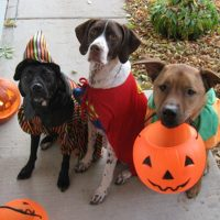 Keep Your Pets Safe At Halloween